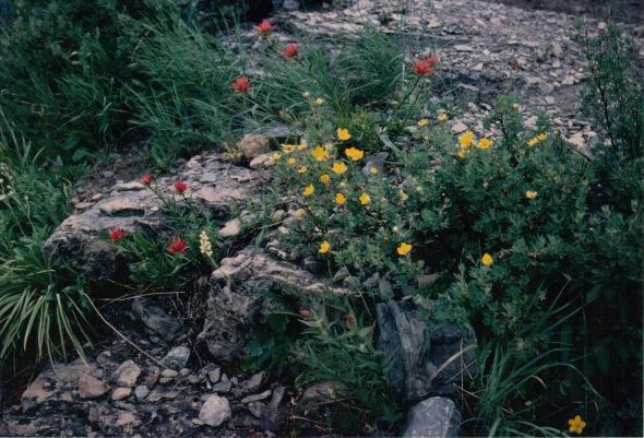 Garden Wall - flower field