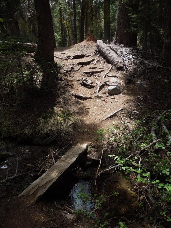 Paradise Meadow trail