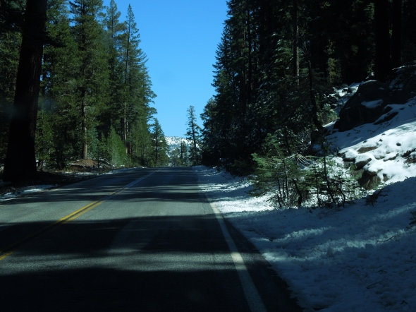Tioga Road (Highway 120)