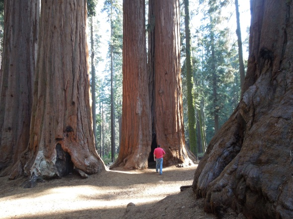 Parker Group, Sequoia National Park