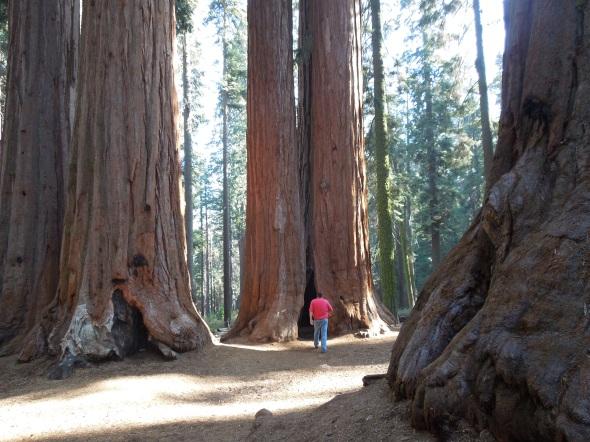 Parker Group, Sequoia National Park