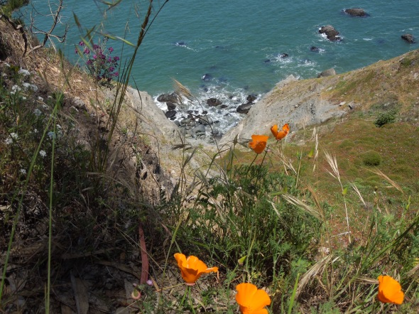 Coast Trail, Golden Gate National Recreation Area, CA